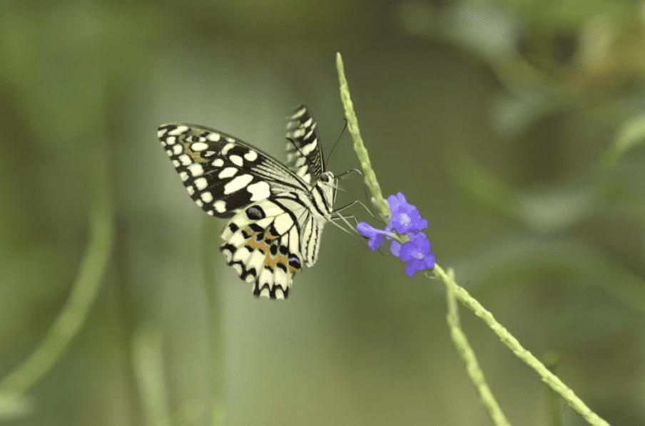 五彩繽粉的蝴蝶們