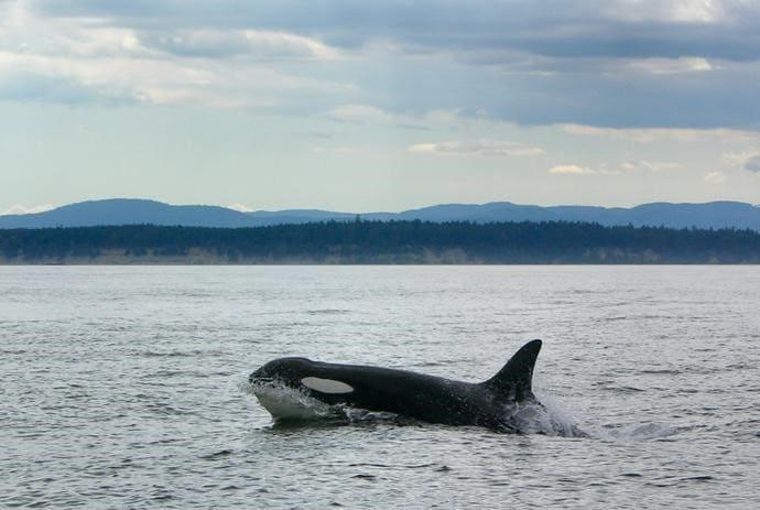 我們很幸運地看到了鯨魚出現的瞬間呢!!